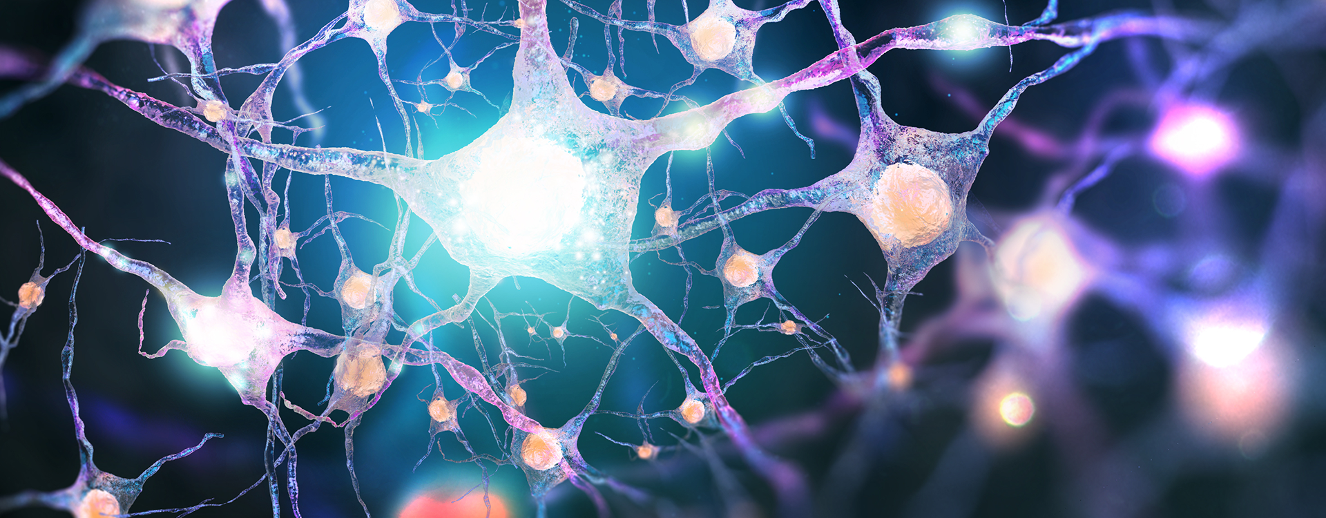 Neurons form new connections in the brain to overcome neural trauma.